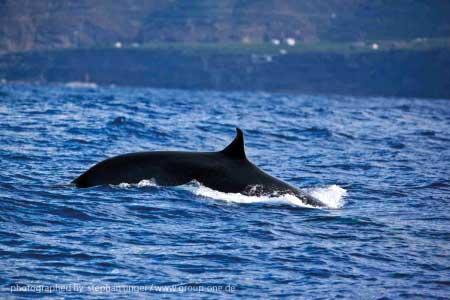 Wale vor La Palma